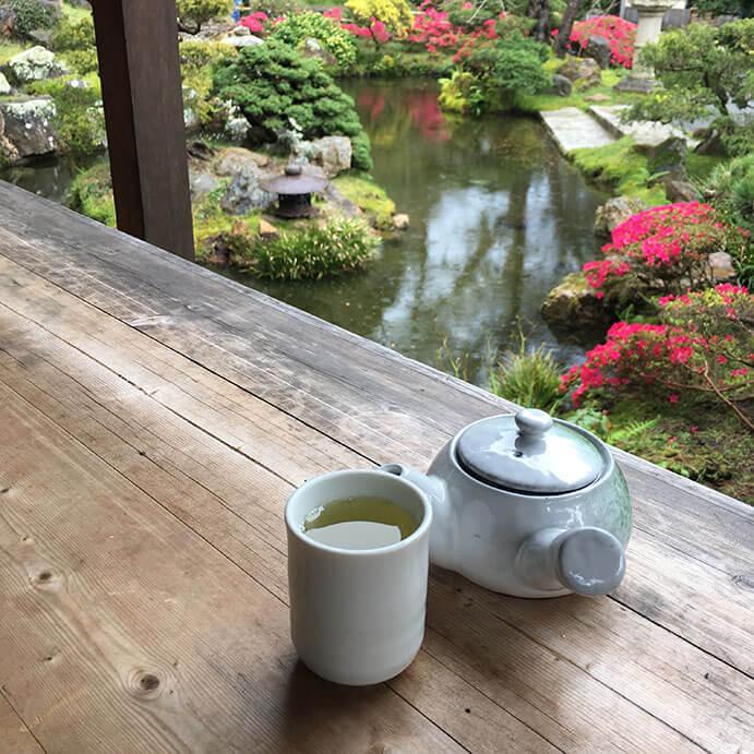Having sencha at the Japanese Tea Garden in San Francisco (more of this)